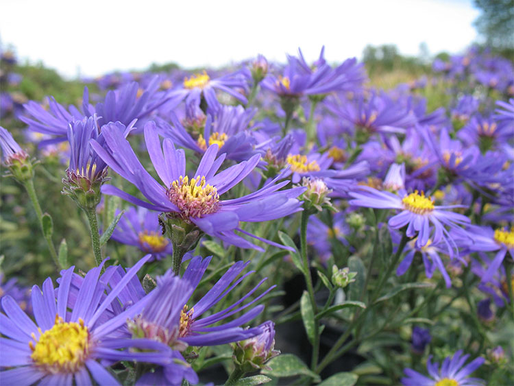 Lans flower farm gift certificate 11 mightylinksfo Images